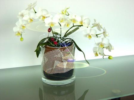 phalenopsis im glas pflanzen haedi flor meisterbetrieb onlineshop. Black Bedroom Furniture Sets. Home Design Ideas