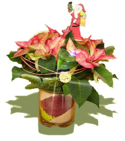 Weihnachtsstern im glas pflanzen haedi flor for Pflanzen im glas